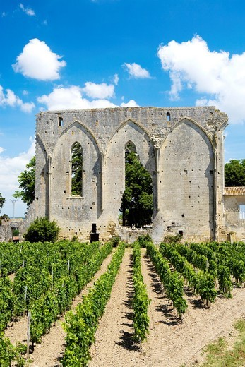 Stock Photo: 1566-741837 Ruins of the Dominicans Convent known as Great Walls or Grande Muraille  Saint Emilion, town listed as World Heritage by UNESCO  Libourne district, Gironde department, Aquitania region  France