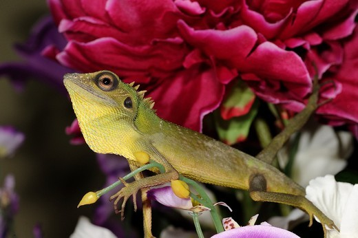 Chameleon on a vase of artificial flowers : Stock Photo
