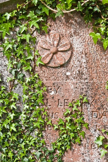 Close up of an overgrown gravestone, Ireland, Europe : Stock Photo