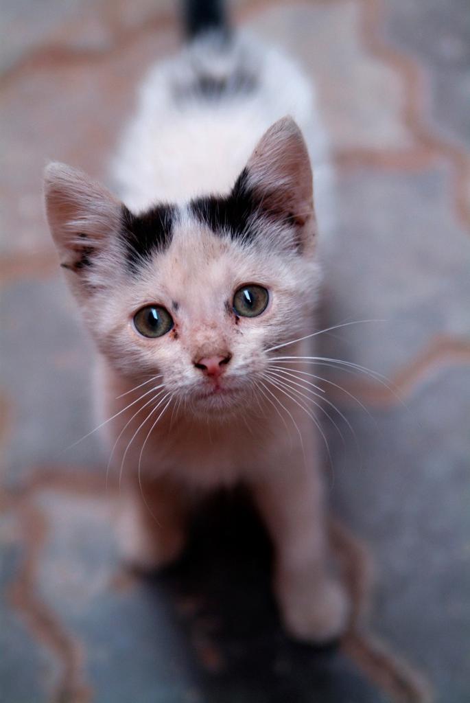 Stock Photo: 1566-746566 cute kitten
