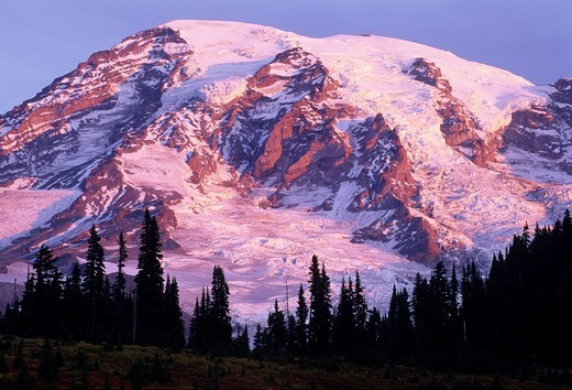 Mt Rainier, Mt Rainier National Park, WA : Stock Photo
