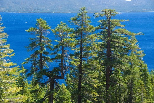 Lake Tahoe, DL Bliss State Park, California : Stock Photo