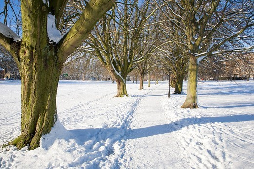 Tree Lined Path on The Stray in Winter Harrogate North Yorkshire England : Stock Photo