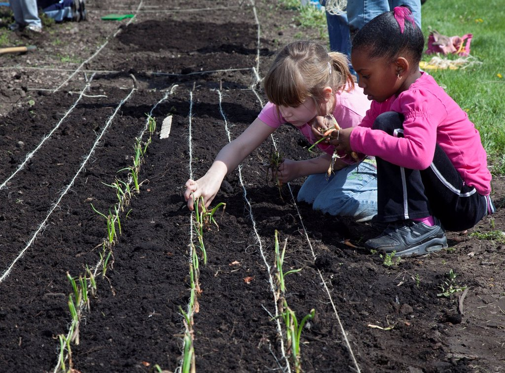 Southfield, Michigan - Daisy Girl Scouts and other volunteers help plant onions in a garden that will grow produce for the Gleaners Community Food Bank  Daisies are in kindergarten and first grade  The garden is sponsored by DTE Energy on vacant land adja. Southfield, Michigan - Daisy Girl Scouts and other volunteers help plant onions in a garden that will grow produce for the Gleaners Community Food Bank  Daisies are in kindergarten and first grade  The garden is sponsored by DTE Energy on vaca : Stock Photo