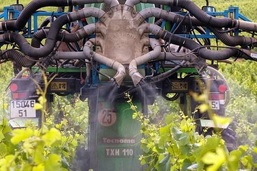 vineyard in champagne, France : Stock Photo