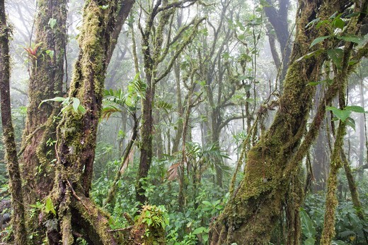 Stock Photo: 1566-760636 Monteverde Cloud Forest Preserve  Costa Rica