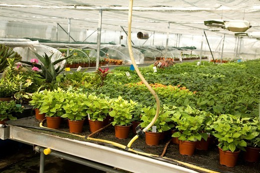 Water pump circulation system in nursery greenhouse : Stock Photo
