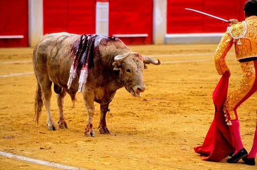 Bullfight at the Plaza de Toros, Granada, Andalusia, Spain, Europe : Stock Photo