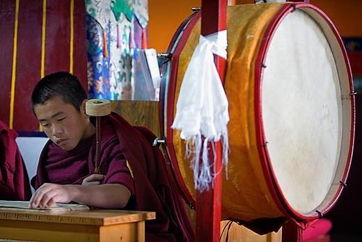 Stock Photo: 1566-766394 Puja,Monk praying, in Dip Tse Chok Ling Monastery McLeod Ganj, Dharamsala, Himachal Pradesh state, India, Asia