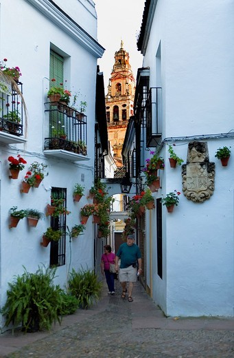 Cordoba Andalusia  Spain: Calleja de las Flores, in the background Bell tower or minaret of the mosque-cathedral : Stock Photo