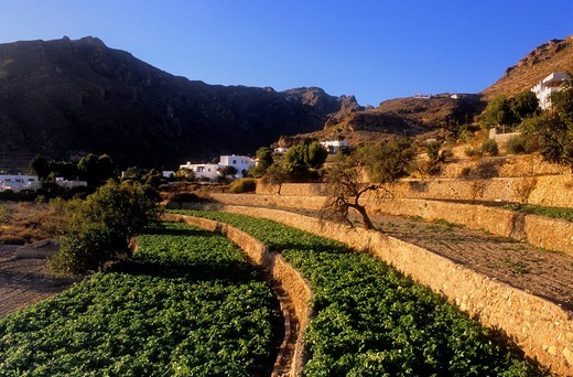 Rambla de Huebro Near Nijar, Almeria province, Andalucia, Spain : Stock Photo