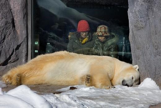 Polar bear,Asahiyama zoo, Asahikawa, Hokkaido, Japan : Stock Photo
