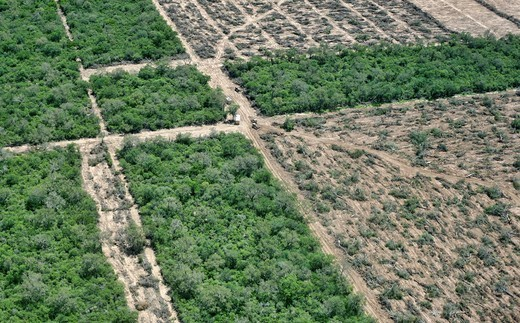 Deforestation in the Gran Chaco near Mariscal Estigarribia, Paraguay : Stock Photo