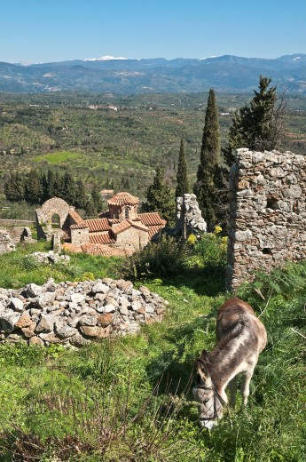 The hill of Mystra in the Spring, with its Byzantine ruins, looking across towards mount Parnon, Peloponnese, Greece : Stock Photo