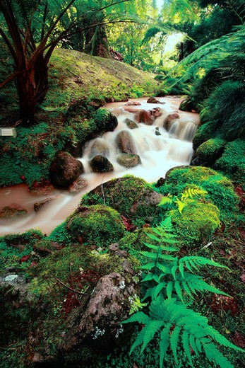 Stream of iron waters and lush green vegetation in Terra Nostra Park Parque Terra Nostra  Furnas, Sao Miguel island, Azores, Portugal : Stock Photo