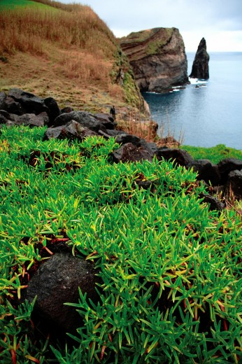 Coastal landscape with islet, near the town of Ribeira Grande  Sao Miguel island, Azores islands, Portugal : Stock Photo