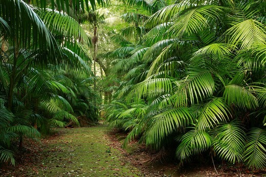 Footpath amidst subtropical vegetation in Parque Terra Nostra  Sao Miguel, Azores islands, Portugal : Stock Photo
