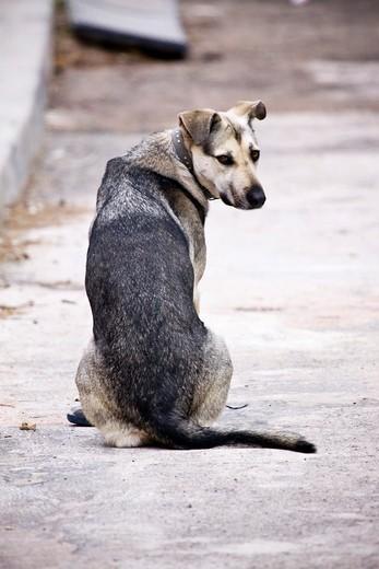 Dog at street looking back. : Stock Photo