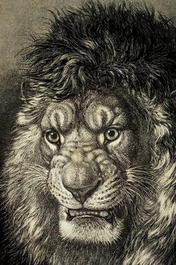 Stock Photo: 1566-781460 The Lion, King of Beasts  From El Mundo Ilustrado, published Barcelona, 1880