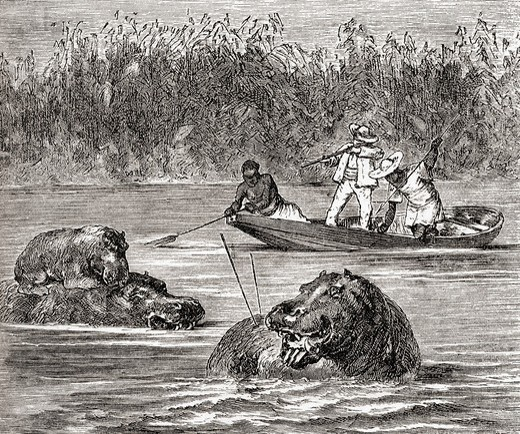 Hippopotamus hunting in Africa in the 19th century  From Africa by Keith Johnston, published 1884 : Stock Photo