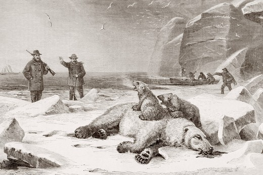 Hunting the polar bear Ursus maritimus in the Arctic Circle during the late 19th century  Two cubs defend the body of their mother which has been shot  From El Mundo Ilustrado, published Barcelona, circa 1880 : Stock Photo