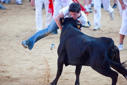 Spain, Navarre, Pamplona, Festival of San Fermin, Encierro running of the bulls, bullring, vaquilla little cow : Stock Photo