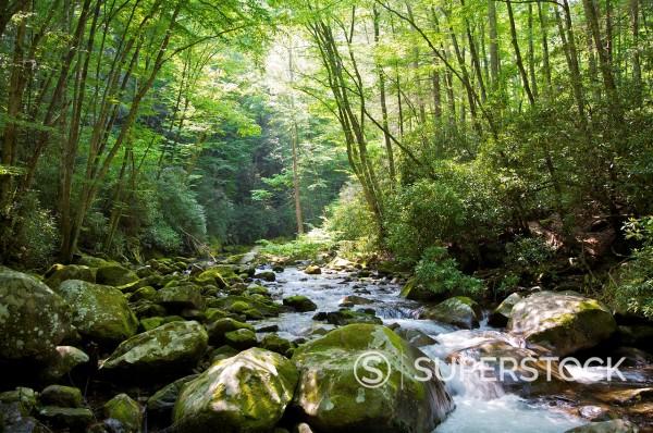 Bridge over Big Creek, Great Smoky Mountains National Park, North Carolina, USA : Stock Photo