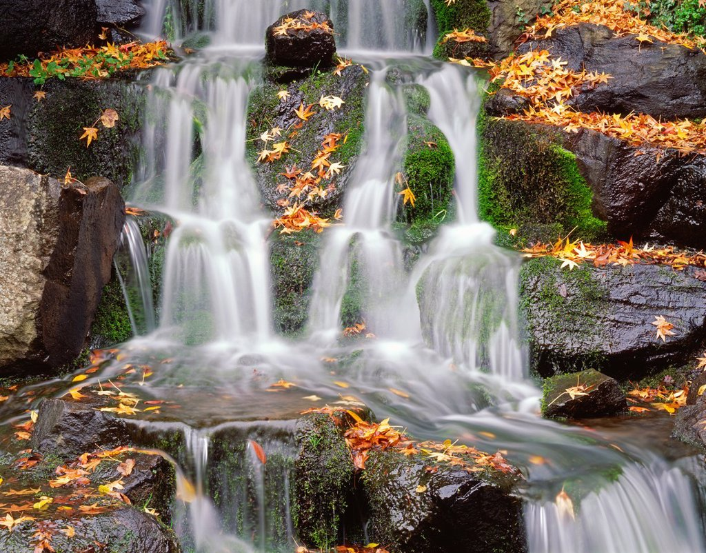 Small, mossy waterfall and fallen, autumn leaves of maple, Crystal Springs Rhododendron Gardens, Multnomah County, Portland, Oregon, USA : Stock Photo