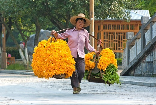 Woman carrying a very heavy load of pumpkin flowers, which are sold for sauces, at a village market in Yangshuo, Guangxi, China : Stock Photo