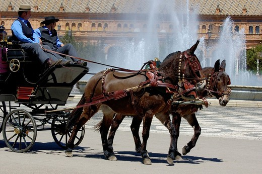 Horsedrawn cart driving people around the Plaza de Espana during the Feria De Abril, Seville, Andalusia, Spain : Stock Photo