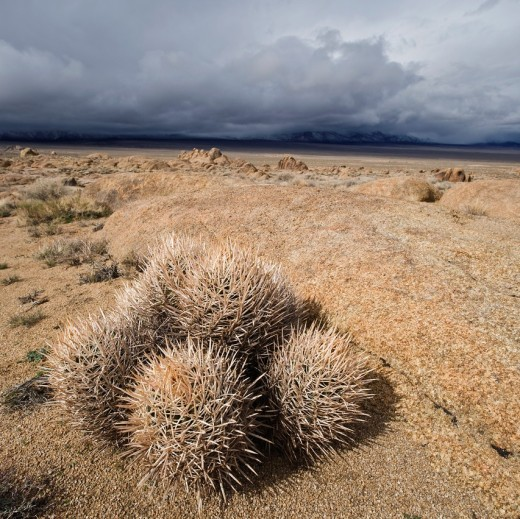 Barrel cactus and Alabama Hills, Owen´s Valley, California : Stock Photo