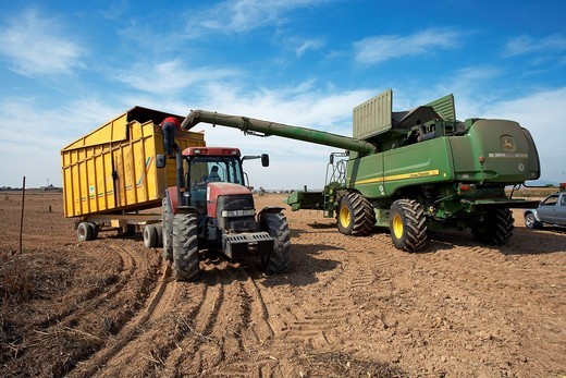 Stock Photo: 1566-793156 Reaping machine unloading corn  LLeida  Spain