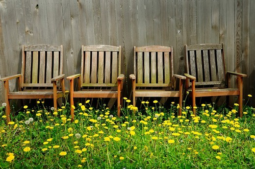 Stock Photo: 1566-796888 Backyard dandelions and chairs