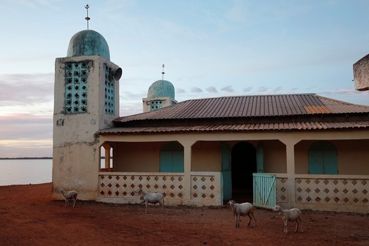 West African mosque and sheep in sunset light, The Gambia : Stock Photo