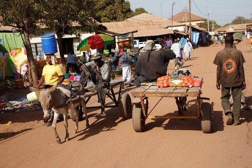 Stock Photo: 1566-797545 African traditional market with donkey carts, the Gambia