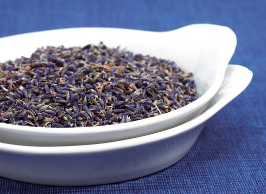 LAVENDER avandula sp, AROMATIC PLANT : Stock Photo