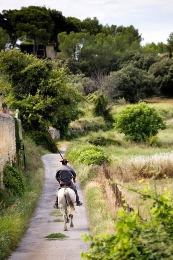 Gardian riding on Camargue pony and holding long stick to herd bulls, Aubais, near Nîmes, Gard, France : Stock Photo