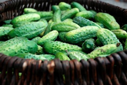 Stock Photo: 1566-804934 Basket full of fresh cucumbers
