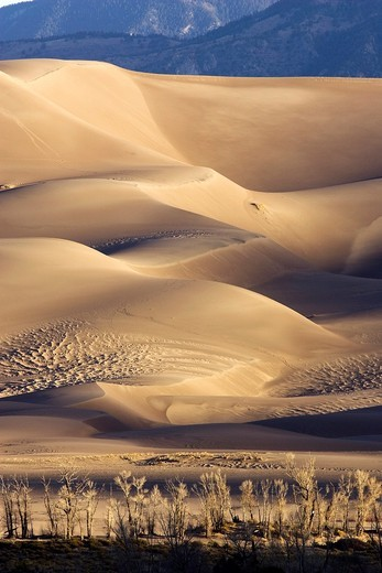 Stock Photo: 1566-811688 Sand dunes in early morning light - Great Sand Dunes National Park and Preserve - near Mosca, Colorado