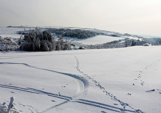 Stock Photo: 1566-813239 Winter scene