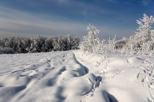 Winter scene : Stock Photo