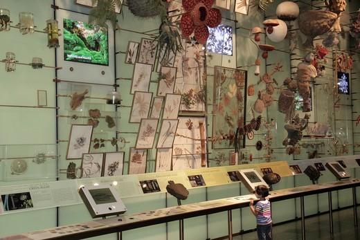 New York, New York City, NYC, Manhattan, Uptown, Central Park West, American Museum of Natural History, interactive exhibit, science, education, biosiversity, species, specimen, girl, preschooler, viewing, algae, mosses, ferns, plants, collection, : Stock Photo