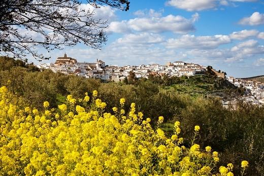 Stock Photo: 1566-817301 Baena, Cordoba province, Andalusia, Spain.