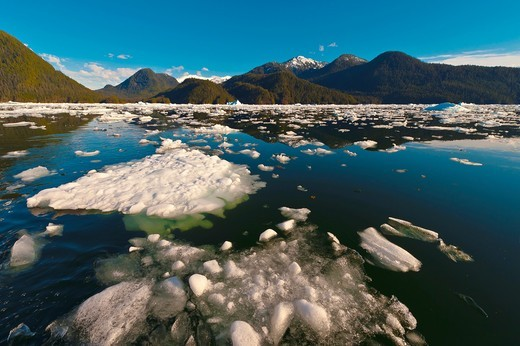 Stock Photo: 1566-817442 Icebergs and ice floes, LeConte Bay near LeConte Glacier, between Petersburg and Wrangell, southeast Alaska USA