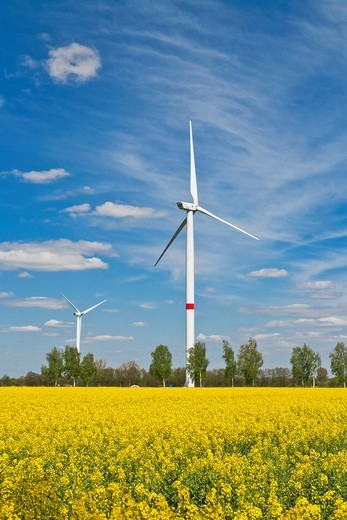 Field of rape with wind engines in Lower Saxony, Germany, Europe : Stock Photo
