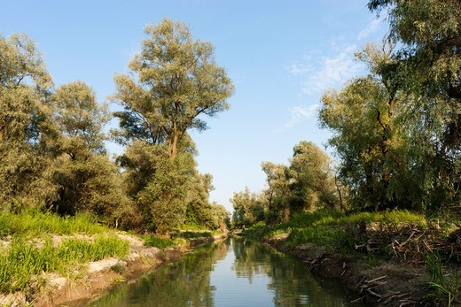 Stock Photo: 1566-818658 The Channels of the Danube Delta, romania  Big willows, alder and ash trees from a riparian forest along the cahnnels  Only during September large parts of the Delta dry out, high water marks on the trees are still showing the water level during the sprin. The Channels of the Danube Delta, romania  Big willows, alder and ash trees from a riparian forest along the cahnnels  Only during September large parts of the Delta dry out, high water marks on the trees are still showing the water level duri
