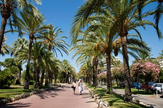 Stock Photo: 1566-818925 Walkers along the palm tree lined Croisette, Cannes, Cote d´Azur, France