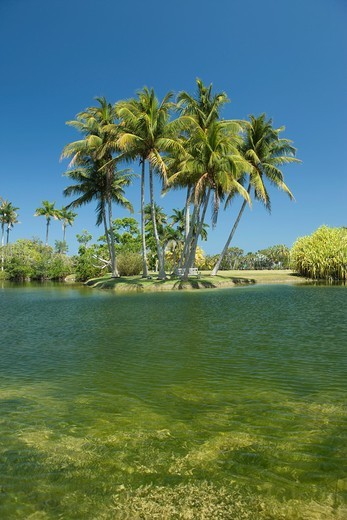 PALMS PANDANUS LAKE FAIRCHILD TROPICAL BOTANIC GARDEN CORAL GABLES FLORIDA USA : Stock Photo