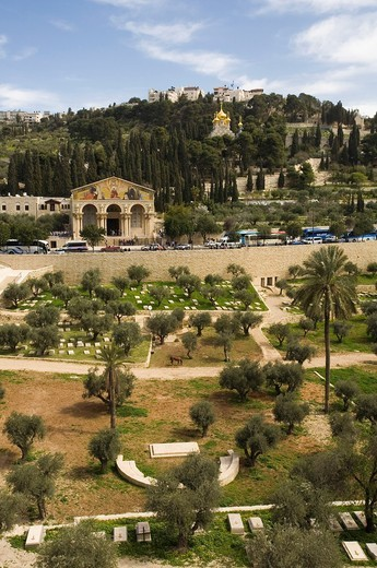 Stock Photo: 1566-827266 On background Church of All Nations, Mount of Olives, Jerusalem, Israel, Middle East.