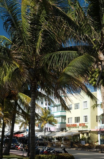 PALMS HOTELS OCEAN DRIVE SOUTH BEACH MIAMI BEACH FLORIDA USA : Stock Photo